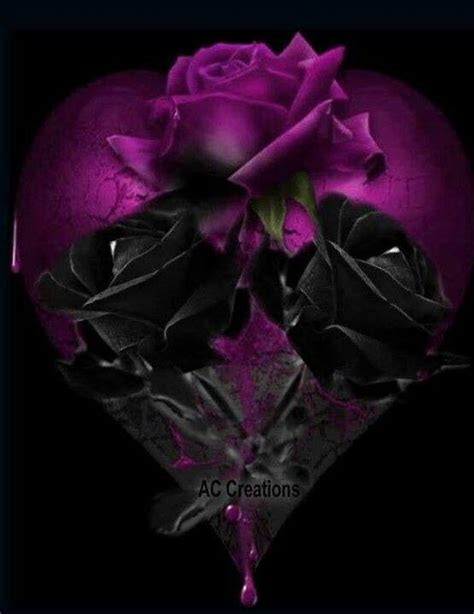 black n purple roses flowers pinterest