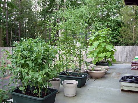 vegetable gardens in containers 60 best balcony vegetable garden ideas 2016 roundpulse