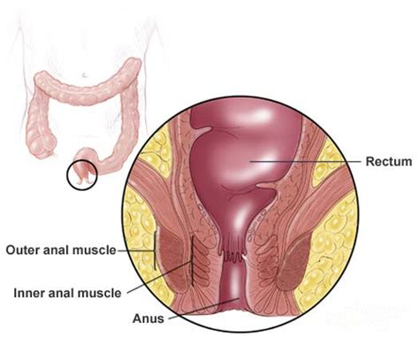 What Are The Four Sections Of The Large Intestine by 5 Components In Large Intestine And Their Functions