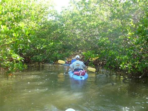 sw boat tours in florida through the mangrove tunnel picture of kayak sw florida