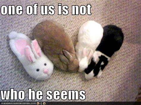 Silly Rabbit Meme - animal humor images silly animals wallpaper and background
