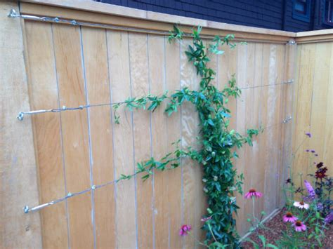 wire supports for climbing plants easy way to twining vine plants on walls fences and