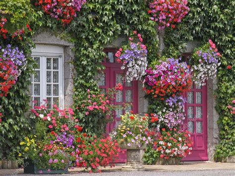 house with flowers house with flowers brittany france stock photo