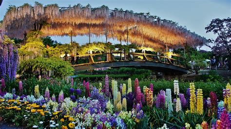 ashikaga flower park ashikaga flower park japan best places to see flowers