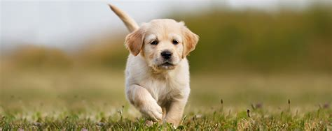 pictures of puppys eukanuba puppy resources