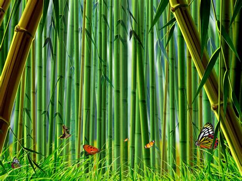 imagenes wallpaper bamboo bamboo forest hd desktop wallpaper beautiful desktop