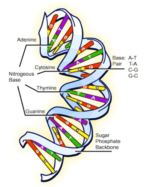 dna pattern name dna and the genetic code designedbabies