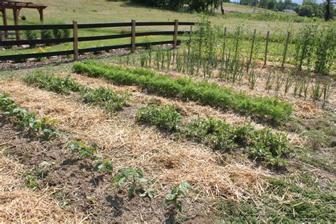 Raised Row Gardening How To Grow Simple Old World Raised Rows Vegetable Garden
