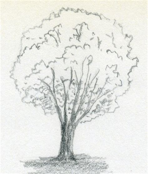 draw a tree realistic tree drawing search how to draw