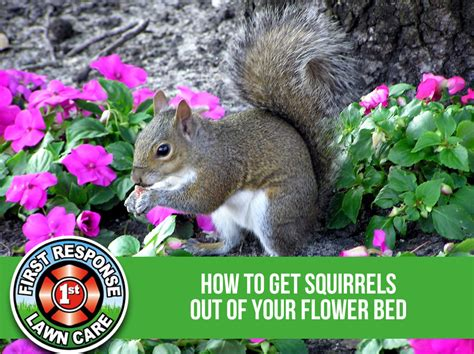 how to keep squirrels out of flower beds how to keep squirrels out of flower beds 28 images how to keep squirrels out of