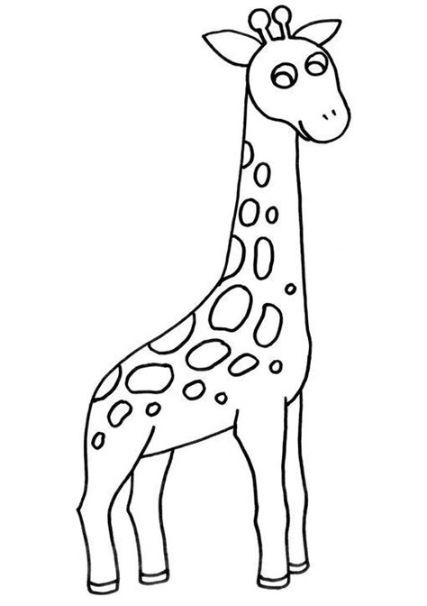 imagenes jirafas para pintar dibujos para imprimir y colorear jirafa para colorear