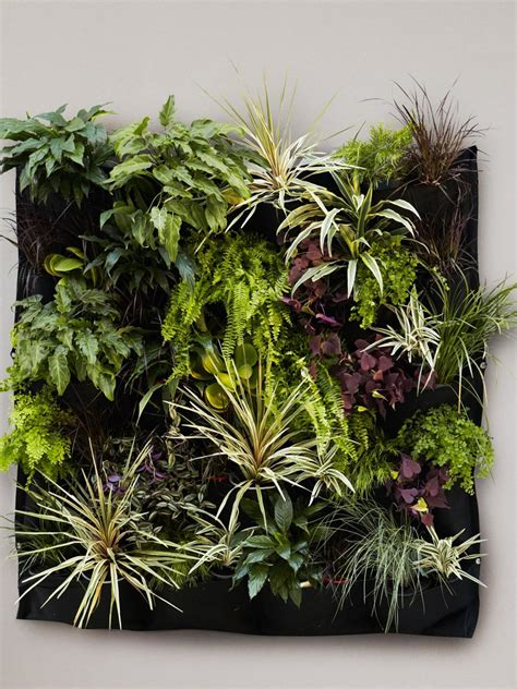 durie vertical gardens search viewer hgtv