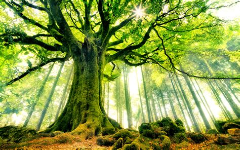 beautiful trees beautiful strange tree wallpaper