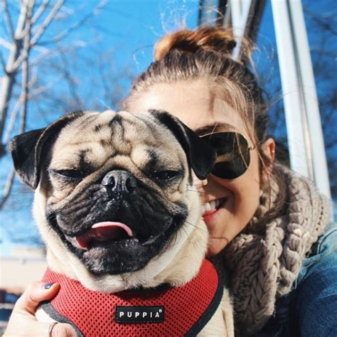 pug owners 5 things you didn t about doug the pug barkpost