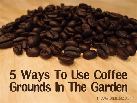 Coffee Grounds For Gardening by 5 Ways To Use Coffee Grounds In The Garden Northwest