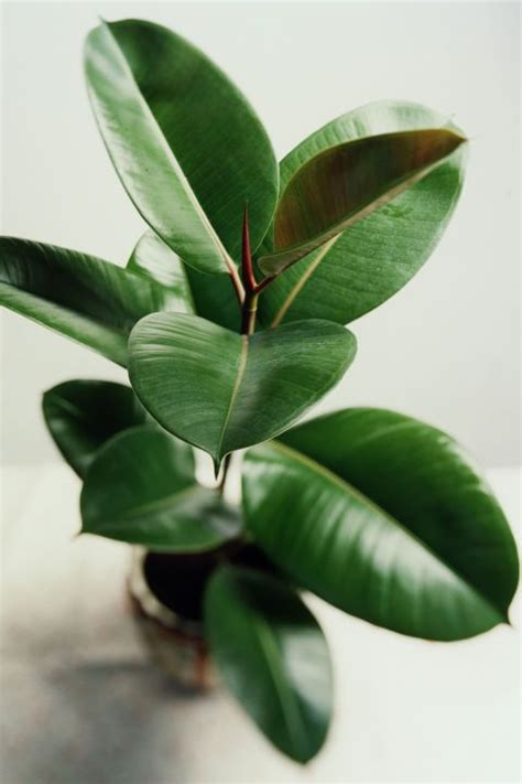 inside house plants 25 best ideas about house plants on pinterest plants
