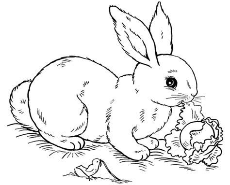 Free Printable Rabbit Coloring Pages For Kids Rabbit Coloring Pages
