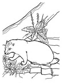 realistic coloring pages badger coloring pages realistic realistic coloring pages