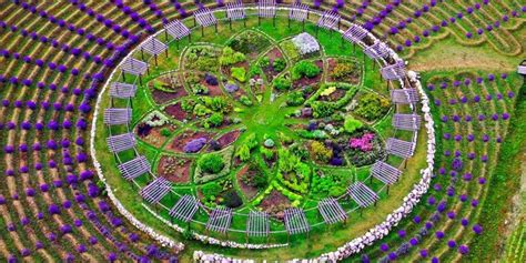 lavender labyrinth this mesmerizing lavender labyrinth is a real life
