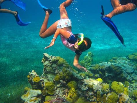 for snorkeling cozumel snorkeling tours cozumel cruise excursions
