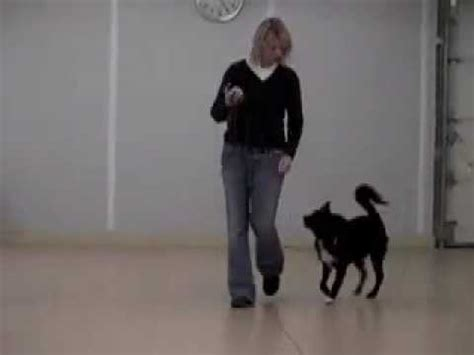 how to use a remote collar how to use a remote collar for fearful dogs marley s story