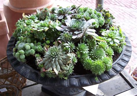 Best Planters For Succulents by Martha Moments Succulents In Containers
