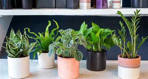 which plants can survive without sunlight plants to have in your bedroom to help you sleep better
