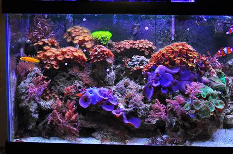 150 Ft In M fs ft moving frog spawn zoas shroomes lr 75g 4