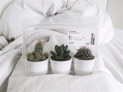 8 Pretty White Accessories by Top Cactus Not A Top Lol Wanting Creature Home