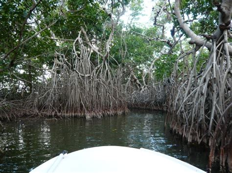 Forest Mba Reviews by Mangrove Forest Tour Bamba Experience