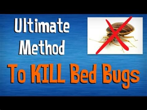 the best way to kill bed bugs how to kill bed bugs fast best advice on killing bed