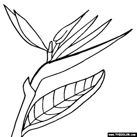 coloring pages bird of paradise bird of paradise flower online coloring page stained