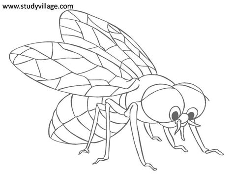 funny insects printable coloring page for kids 14 funny