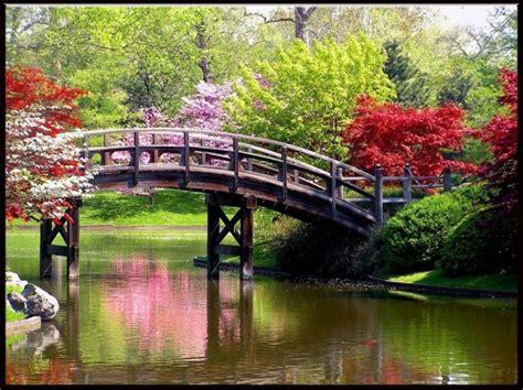 alberi fioriti in primavera primavera le foto pi 249 pourfemme