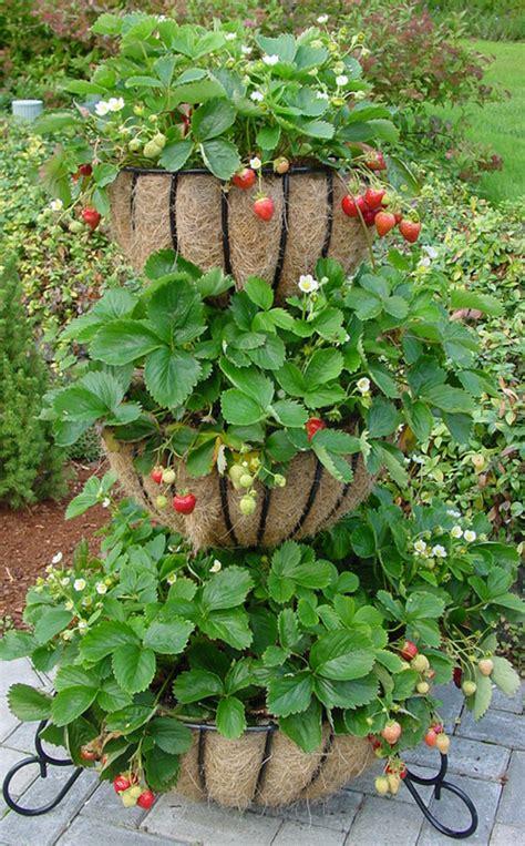 vaso per fragole fragole sul balcone la colonna di balconette fiori e foglie