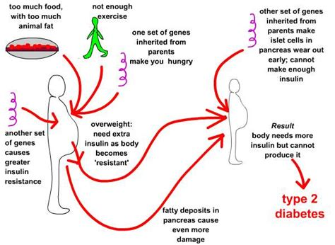 Pathophysiology Of Diabetes Type 2 Essay by Type 2 Diabetes Causes