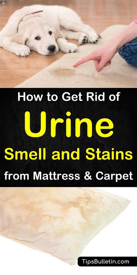 how to get rid of pee smell in bathroom how to get rid of urine smell and stains from mattress and