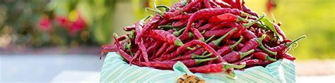 semina peperoncino in vaso come coltivare i peperoncini in vaso e nell orto