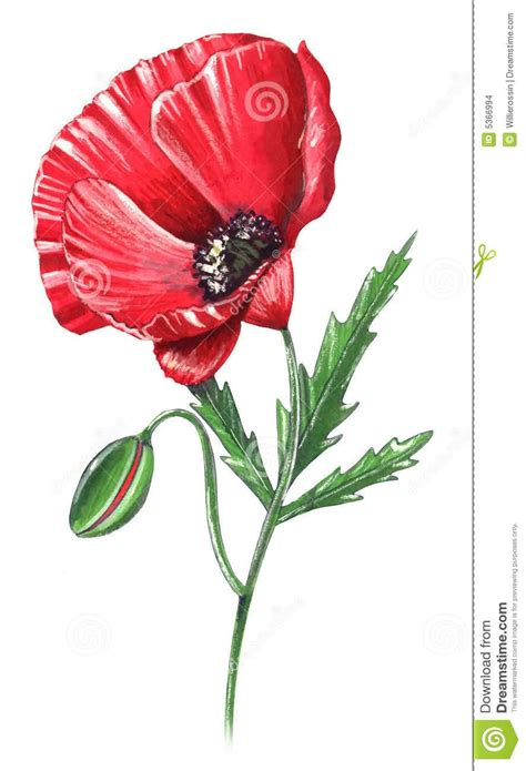 tattoo poppy designs poppy images designs