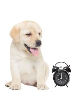 easy way to potty a puppy potty your puppy the easy way thedogtrainingsecret