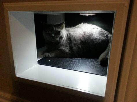 diy cat tunnels doors pass  bypass