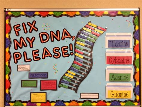 biological themes in film class dna structure bulletin board high school biology