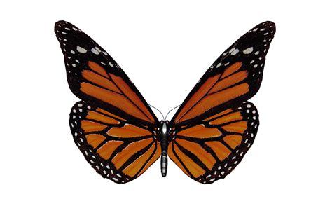 Butterfly Wings free illustration butterfly wings garden free image