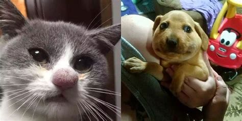 dogs stung by bees photos of cats stung by bees and dogs