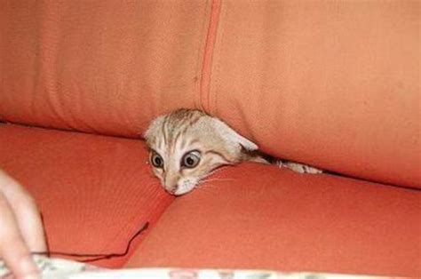 cat in couch funny cute animal pictures funny animal