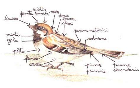 tortore alimentazione gli uccelli