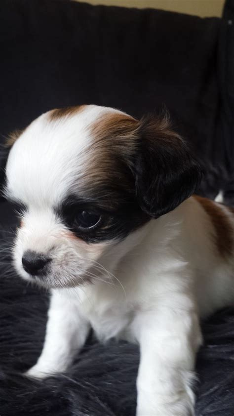 puppy litters for sale stunning litter of puppies for sale doncaster south pets4homes