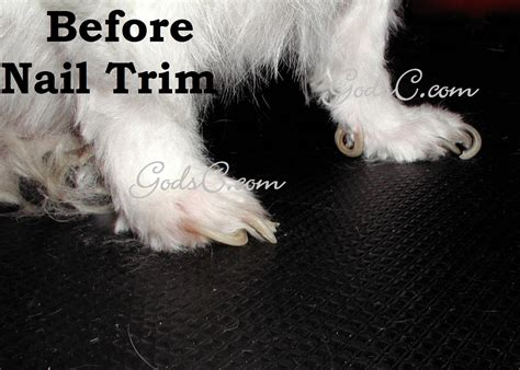 how to trim nails that are overgrown dogs god s creatures