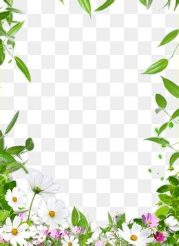 flowers card template border of paper border frame png images vectors and psd files free