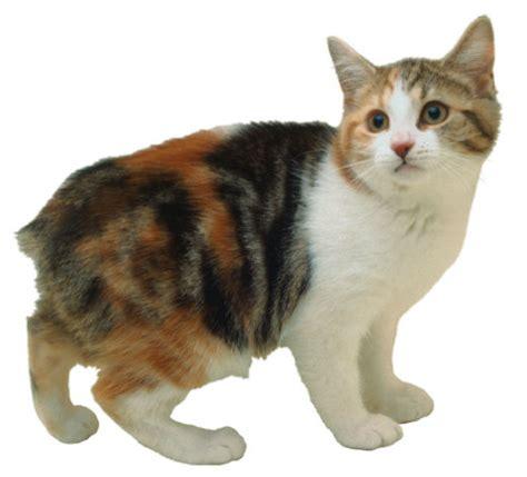 Manx Cats ? Jeanne Foguth's Blog